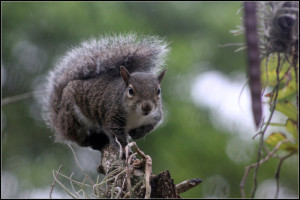 image of squirrel balancing